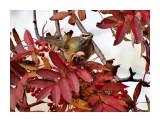 Оливковый дрозд 11 октября  Просмотров: 399 Комментариев: 0