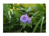 IMG_8894 Фотограф: vikirin  Просмотров: 795 Комментариев: 0