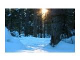В лесу на закате.. зимнее солнце.. Фотограф: vikirin  Просмотров: 2567 Комментариев: 0