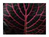 Мечта о дереве Фотограф: vikirin  Просмотров: 1158 Комментариев: 0