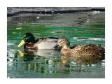 Название: DSC01584 Фотоальбом: Осень в зоопарке Категория: Животные  Просмотров: 114 Комментариев: 1