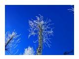Деревья Фотограф: alexei1903  Просмотров: 1315 Комментариев: 0