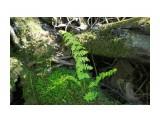 Растет на дереве.. ему надо то-кусочек мха да горстку земли... Фотограф: vikirin  Просмотров: 1902 Комментариев: 0