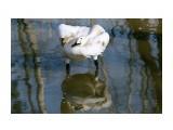 Название: какое небо голубое... Фотоальбом: Зоопарк Категория: Животные  Время съемки/редактирования: 2009:11:05 21:15:41 Фотокамера: Canon - Canon EOS 400D DIGITAL Диафрагма: f/6.3 Выдержка: 1/1250 Фокусное расстояние: 108/1 Светочуствительность: 400   Просмотров: 1934 Комментариев: 1