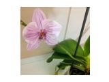 брошь брошь- орхидея из фоамирана. повтор возможен в другом цвете. около 9 см  Просмотров: 316 Комментариев: 0
