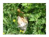 Мой котяра  Просмотров: 884 Комментариев: