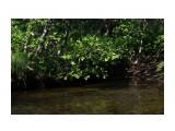 На речке в жару под зеленым сводом на так жарко... Фотограф: vikirin  Просмотров: 1686 Комментариев: 0