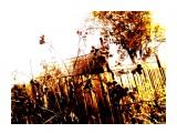осень паутины Фотограф: фотохроник  Просмотров: 242 Комментариев: 0