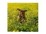 Название: Фото 23 Фотоальбом: Мои собаки Категория: Животные Фотограф: Светличная Наталья  Просмотров: 990 Комментариев: 1