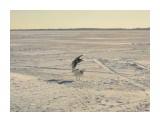 Название: SDC10231 Фотоальбом: 2015 - 2014 11 рыбалки на Лунском Категория: Природа Фотограф: vikirin  Время съемки/редактирования: 2015:12:04 20:05:11 Фотокамера: SAMSUNG - SAMSUNG ES15 / VLUU ES15 / SAMSUNG SL30 Диафрагма: f/15.2 Выдержка: 1/250 Фокусное расстояние: 189/10    Просмотров: 650 Комментариев: 0
