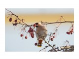 Птички  _DSC0540   Просмотров: 5  Комментариев: 0