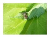 Природа есть, Природа! Фотограф: viktorb Окр. Южно-Сахалинска!  Просмотров: 1027 Комментариев: 0