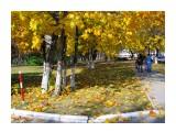 Название: Роняют листья.. Фотоальбом: 2008 10 17 Осень в Южном Категория: Природа Фотограф: vikirin  Время съемки/редактирования: 2008:10:17 13:23:47 Фотокамера: Canon - Canon PowerShot SX100 IS Диафрагма: f/4.5 Выдержка: 1/1250 Фокусное расстояние: 6000/1000 Светочуствительность: 200   Просмотров: 4612 Комментариев: 0