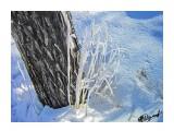 Деревья Фотограф: alexei1903  Просмотров: 1222 Комментариев: 0