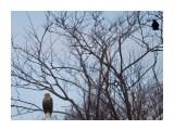 Название: Беседуют... Фотоальбом: Красота пернатая Категория: Природа Фотограф: Tsygankov Yuriy  Время съемки/редактирования: 2021:02:23 10:20:37 Фотокамера: Canon - Canon EOS 60D Диафрагма: f/6.3 Выдержка: 1/1250 Фокусное расстояние: 500/1    Просмотров: 106 Комментариев: 0