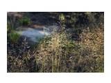 Название: DSC04253 Фотоальбом: 2015 09 Озеро в Славах Категория: Природа Фотограф: vikirin  Время съемки/редактирования: 2015:09:11 12:32:00 Фотокамера: SONY - NEX-5T Диафрагма: f/6.3 Выдержка: 1/100 Фокусное расстояние: 500/10    Просмотров: 716 Комментариев: 0