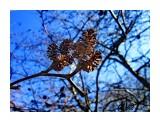 IMG_2309 Фотограф: alexei1903  Просмотров: 1208 Комментариев: 0