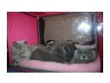 """Название: питомник """"Soffy"""" Фотоальбом: выставка кошек 20.12.09 Категория: Животные  Время съемки/редактирования: 2009:12:20 10:59:01 Фотокамера: Canon - Canon EOS 1000D Диафрагма: f/4.0 Выдержка: 1/60 Фокусное расстояние: 18/1 Светочуствительность: 400  Описание: В тесноте, да не в обиде  Просмотров: 684 Комментариев: 6"""