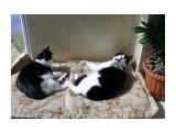 Бася и Мася Фотограф: tasya  Просмотров: 384 Комментариев: 0