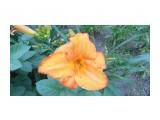 Название: P1000213 Фотоальбом: Цветы. Категория: Цветы  Просмотров: 423 Комментариев: 0