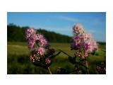 DSC09385 Фотограф: vikirin  Просмотров: 291 Комментариев: 0