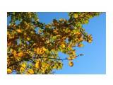 На севере Сахалина тополя едва тронула осень.. Фотограф: vikirin  Просмотров: 1597 Комментариев: 0