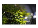 Название: В лесном сумраке весенняя зелень Фотоальбом: ЗИМА .. уже перед самым мартом.. Категория: Природа Фотограф: vikirin  Просмотров: 1452 Комментариев: 0