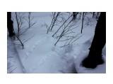 Это рябчик ходил.. че то ему не леталось.. Фотограф: vikirin  Просмотров: 869 Комментариев: 0