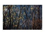Название: Первое весеннее цветенье... Фотоальбом: МГАЧИ Категория: Природа Фотограф: vikirin  Просмотров: 1111 Комментариев: 0