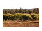 Болотные травы Фотограф: vikirin  Просмотров: 713 Комментариев: 0