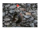 Название: Попалась.... Фотоальбом: 2013 09 12 Заехали на речку!! И ну рыбачить!!! Категория: Рыбалка, охота Фотограф: vikirin  Время съемки/редактирования: 2013:09:23 23:23:35 Фотокамера: Canon - Canon EOS Kiss X3 Диафрагма: f/4.0 Выдержка: 1/500 Фокусное расстояние: 55/1    Просмотров: 1813 Комментариев: 0