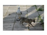 Название: на прогулке Фотоальбом: кошки Категория: Животные  Просмотров: 507 Комментариев: 0