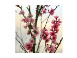 Зацвел персик Фотограф: gadzila Весна Кубани  Просмотров: 400 Комментариев: 2