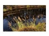 DSC03783 Фотограф: vikirin  Просмотров: 174 Комментариев: 0