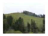 Контрасты Сахалина, лес и бамбук! Фотограф: viktorb о. Сахалин, район Яблоневого перевала!  Просмотров: 977 Комментариев: 0