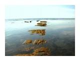 Дорога к морю.. Фотограф: vikirin  Просмотров: 3960 Комментариев: 0