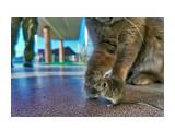 разное  кошки-мышки   Просмотров: 195  Комментариев: 0
