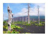 Мертвый лес кратер Отважный влк. Тятя  Просмотров: 778 Комментариев: 0