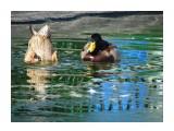 Название: DSC01585 Фотоальбом: Осень в зоопарке Категория: Животные  Просмотров: 123 Комментариев: 0