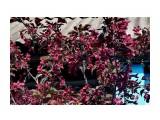 Название: DSC09210 Фотоальбом: В гостях у Тамары Дмитриевны Орловой... Категория: Разное Фотограф: vikirin  Время съемки/редактирования: 2018:06:18 22:45:19 Фотокамера: SONY - NEX-5T Диафрагма: f/8.0 Выдержка: 1/160 Фокусное расстояние: 500/10    Просмотров: 703 Комментариев: 0