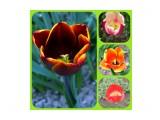 Весенние цветы Фотограф: gadzila  Просмотров: 313 Комментариев: 0