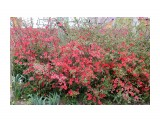 Весна Кубани Фотограф: gadzila  Просмотров: 603 Комментариев: 0