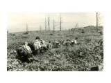 Курилы, остров Кунашир. Август 1963 года, пересекая заросли бамбука. Впереди Владлен Донов.  Просмотров: 110 Комментариев: 0