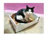 потеряшка ХОЗЯИН ОТЗОВИСЬ. В подъезде, в Луговом уже третий день бегает кот. Кот чистый, домашний. Кто знает помогите найти хозяина кота.  Просмотров: 352 Комментариев: