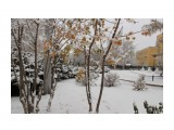 снег  Просмотров: 115 Комментариев: 0