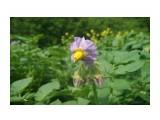 DSC02116 Фотограф: NIK  Просмотров: 555 Комментариев: 0