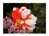 Название: P9084041 Фотоальбом: Цветы Категория: Цветы  Время съемки/редактирования: 2013:09:08 11:08:41 Фотокамера: OLYMPUS IMAGING CORP.   - T105,T100,X36 Диафрагма: f/3.1 Выдержка: 1/800 Фокусное расстояние: 630/100    Просмотров: 1273 Комментариев: 1