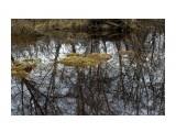Отражение в разливе... Фотограф: vikirin  Просмотров: 1722 Комментариев: 0