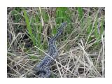 P5270095-к Змеи тоже любятся  Просмотров: 265 Комментариев: 0