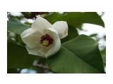 Владивосток. Ботанический сад Фотограф: vikirin  Просмотров: 597 Комментариев: 0